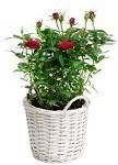 online planten bestellen